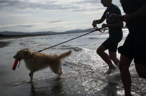 Un cane a un centro di addestramento