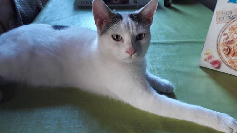 Il gatto di nome Blu